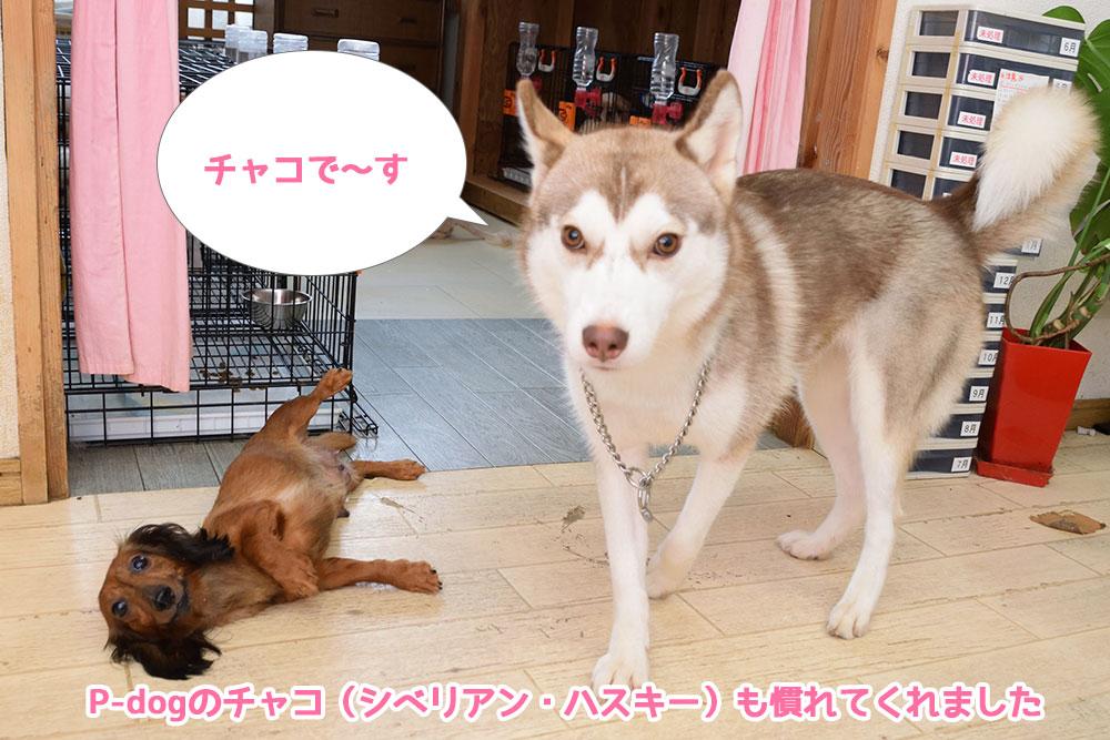 四万十市ペットハウスP-dog